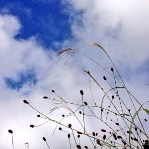 空とワレモコウ