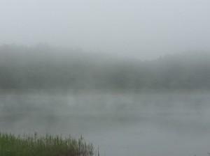 霧の大座法師池