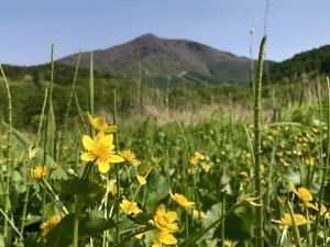 大谷地湿原のレンゲツツジと飯縄山