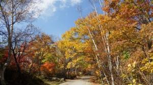 別荘地内の紅葉