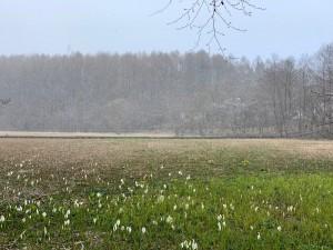 雪の大谷地湿原