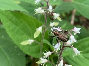 ズダヤクシュと昆虫