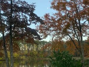 紅葉に染まる大座法師池